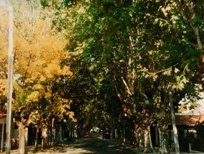 Calle Curie - Padua Norte
